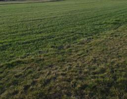 Działka na sprzedaż, Pilchowice, 771 m²
