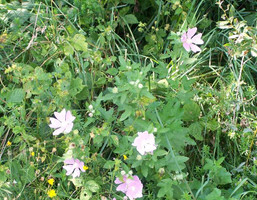 Działka na sprzedaż, Mierzęcice, 1099 m²