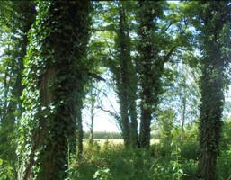 Działka na sprzedaż, Grabce Wręckie Skierniewicka, 21500 m²