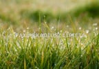 Działka na sprzedaż, Orzech, 1060 m²   Morizon.pl   0751 nr2