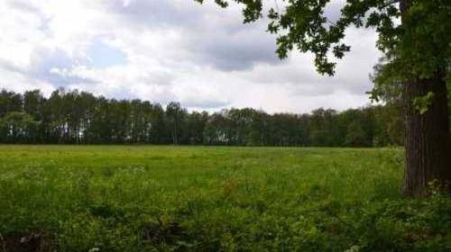 Działka na sprzedaż 81738 m² Zielonogórski Świdnica - zdjęcie 1