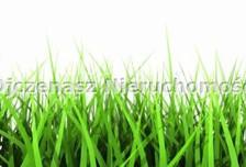 Działka na sprzedaż, Osielsko, 5300 m²