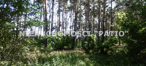 Działka na sprzedaż 4700 m² Poznański Kórnik Kórnik, Radzewo Dworzyska - zdjęcie 2