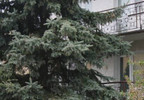 Dom na sprzedaż, Ciechocinek, 220 m² | Morizon.pl | 4621 nr2