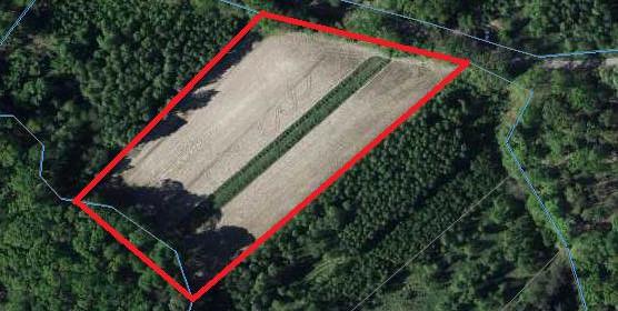 Działka na sprzedaż 11000 m² Lubartowski Lubartów Nowodwór - zdjęcie 2