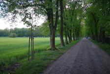 Działka na sprzedaż, Rozalin, 57500 m²