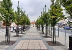 Lokal użytkowy do wynajęcia, Kórnik Plac Niepodległości, 147 m² | Morizon.pl | 2991 nr3