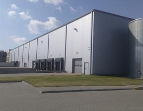Magazyn, hala do wynajęcia, Września, 3700 m²