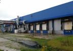 Hala na sprzedaż, Czerniewice Choceńska, 15834 m² | Morizon.pl | 3730 nr7