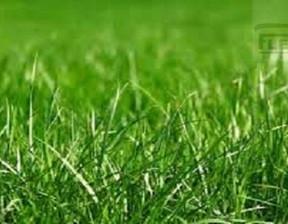 Działka na sprzedaż, Rusiec, 1100 m²