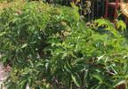 Mieszkanie do wynajęcia, Kielce Centrum, 42 m²   Morizon.pl   3384 nr12