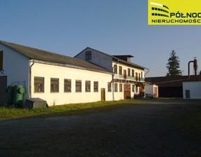 Magazyn, hala do wynajęcia, Zagaje Smrokowskie, 10000 m²