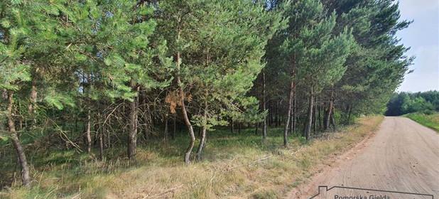 Działka na sprzedaż 20000 m² Złotowski Okonek - zdjęcie 2