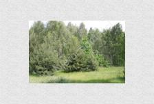 Działka na sprzedaż, Skuły, 16443 m²