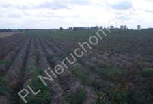 Działka na sprzedaż, Chlebnia, 95000 m²