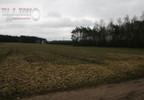 Działka na sprzedaż, Pałczew, 7000 m² | Morizon.pl | 8479 nr3