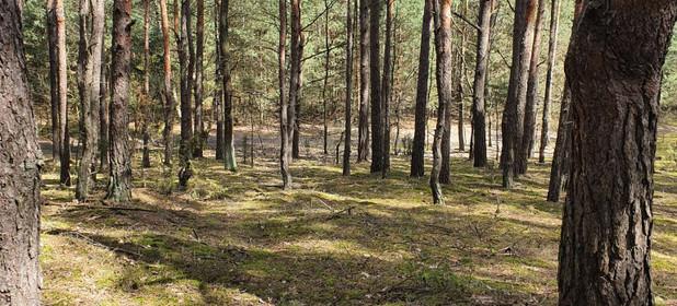 Działka na sprzedaż 15000 m² Otwocki (Pow.) Osieck (Gm.) Nowe Kościeliska - zdjęcie 3
