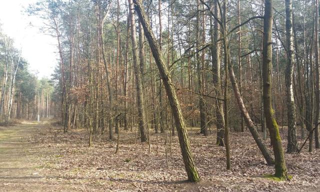 Działka na sprzedaż <span>Grodziski (pow.), Żabia Wola (gm.), Władysławów</span>