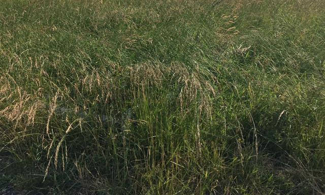 Działka do wynajęcia <span>Opole</span>