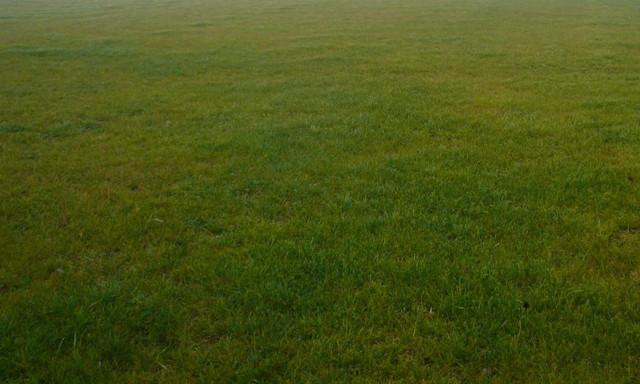 Działka na sprzedaż <span>Grodziski, Żabia Wola, Oddział, Zabia Wola/oddział</span>