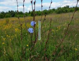Morizon WP ogłoszenia | Działka na sprzedaż, Bobrowiec, 11600 m² | 6592