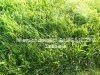 Morizon WP ogłoszenia | Działka na sprzedaż, Żory Rowień-Folwarki, 1446 m² | 3385
