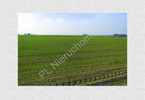 Morizon WP ogłoszenia | Działka na sprzedaż, Siennica, 3000 m² | 1007