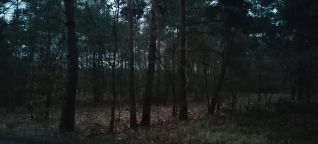 Działka na sprzedaż 25100 m² Koniński Wierzbinek - zdjęcie 2