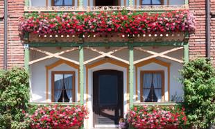 Kwiaty na balkon – 27 łatwych w uprawie roślin balkonowych