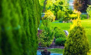 Całoroczne krzewy do ogrodu – jakie wybrać