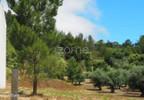 Działka na sprzedaż, Portugalia Alburitel, 5000 m²   Morizon.pl   0869 nr17